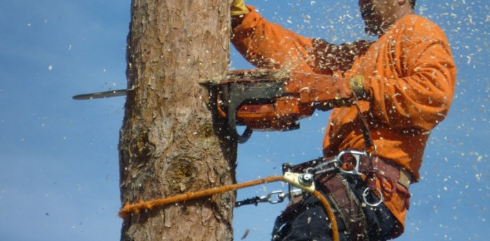 Factors To Consider When Choosing Tree Removal Company